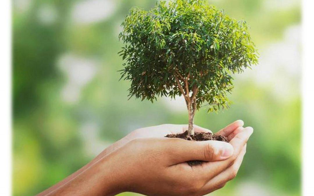 Plan sadnje drveća